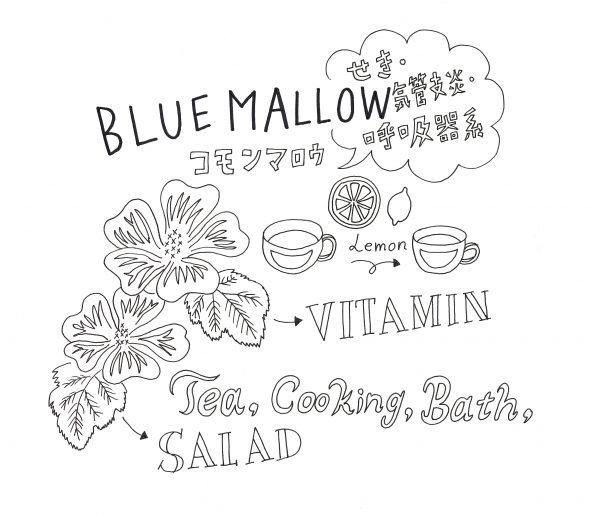 BLUE MALLOW